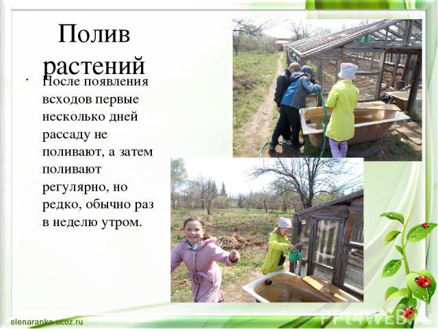Полив растений После появления всходов первые несколько дней рассаду не поливают, а затем поливают регулярно, но редко, обычно раз в неделю утром.