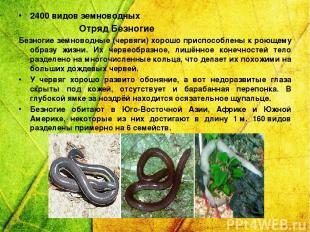 2400 видов земноводных Отряд Безногие Безногие земноводные (червяги) хорошо прис