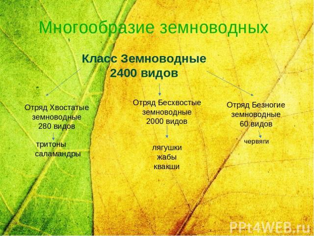 Многообразие земноводных Класс Земноводные 2400 видов Отряд Хвостатые земноводные 280 видов  тритоны саламандры Отряд Бесхвостые земноводные 2000 видов   лягушки жабы квакши Отряд Безногие земноводные 60 видов   червяги