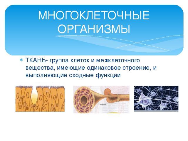 ТКАНЬ- группа клеток и межклеточного вещества, имеющие одинаковое строение, и выполняющие сходные функции МНОГОКЛЕТОЧНЫЕ ОРГАНИЗМЫ