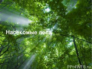 Free Powerpoint Templates Насекомые леса Free Powerpoint Templates Page *
