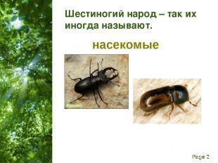 Шестиногий народ – так их иногда называют. насекомые Free Powerpoint Templates P