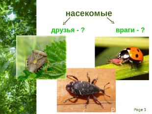 насекомые друзья - ? враги - ? Free Powerpoint Templates Page *