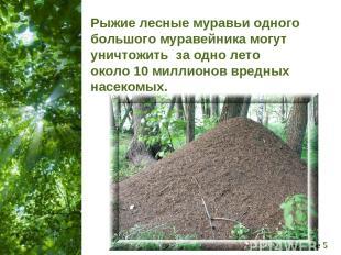 Рыжие лесные муравьи одного большого муравейника могут уничтожить за одно лето о