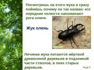 Посмотришь на этого жука и сразу поймёшь почему он так назван: его передние челю