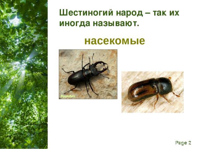 Шестиногий народ – так их иногда называют. насекомые Free Powerpoint Templates Page *