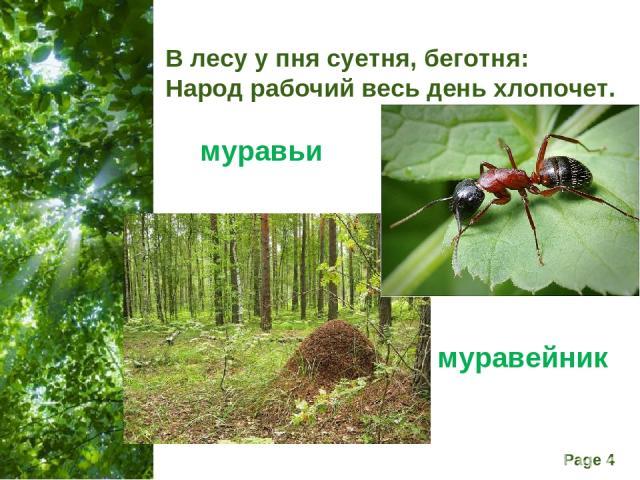 В лесу у пня суетня, беготня: Народ рабочий весь день хлопочет. муравьи муравейник Free Powerpoint Templates Page *