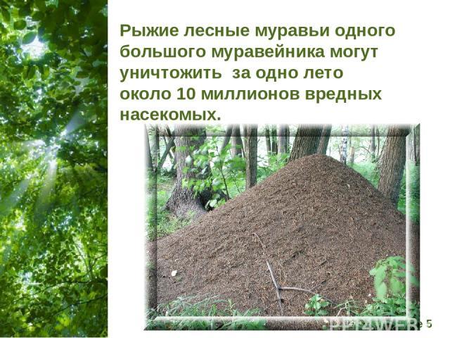 Рыжие лесные муравьи одного большого муравейника могут уничтожить за одно лето около 10 миллионов вредных насекомых. Free Powerpoint Templates Page *