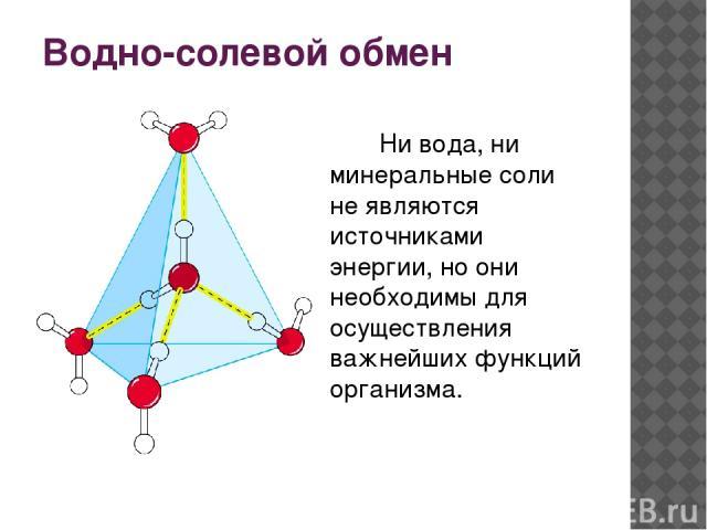 Водно-солевой обмен Ни вода, ни минеральные соли не являются источниками энергии, но они необходимы для осуществления важнейших функций организма.