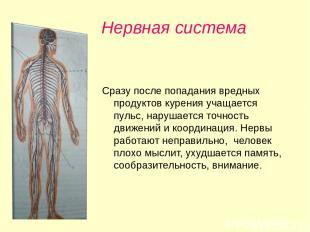 Нервная система Сразу после попадания вредных продуктов курения учащается пульс,