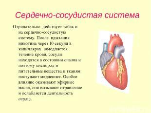 Сердечно-сосудистая система Отрицательно действует табак и на сердечно-сосудисту