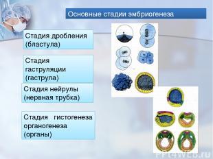 Основные стадии эмбриогенеза Стадия дробления (бластула) Стадия гаструляции (гас