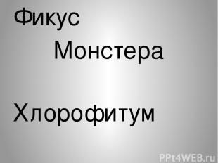 Фикус Монстера Хлорофитум Шефлера