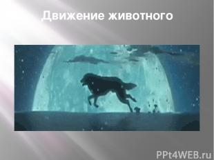 Движение животного