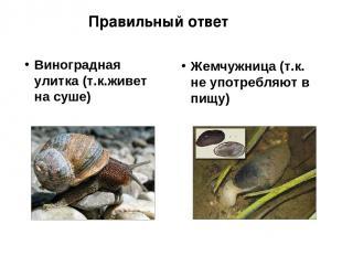 Виноградная улитка (т.к.живет на суше) Жемчужница (т.к. не употребляют в пищу) П