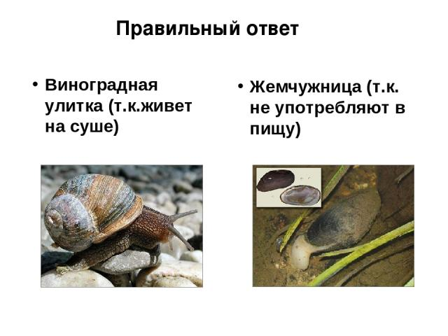 Виноградная улитка (т.к.живет на суше) Жемчужница (т.к. не употребляют в пищу) Правильный ответ