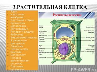 3.РАСТИТЕЛЬНАЯ КЛЕТКА Растительная клетка имеет: Ядро Клеточная мембрана Клеточн