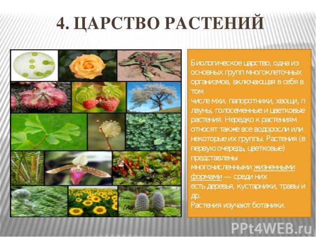 4. ЦАРСТВО РАСТЕНИЙ Биологическоецарство, одна из основных групп многоклеточных организмов, включающая в себя в том числемхи,папоротники,хвощи,плауны,голосеменные ицветковые растения. Нередко к растениям относят также всеводорослиили некото…