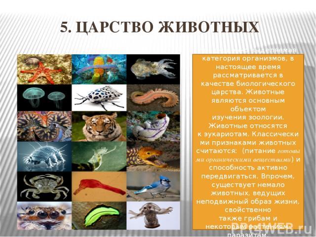 5. ЦАРСТВО ЖИВОТНЫХ традиционно выделяемая категорияорганизмов, в настоящее время рассматривается в качествебиологического царства. Животные являются основным объектом изучениязоологии. Животные относятся кэукариотам.Классическими признаками жи…