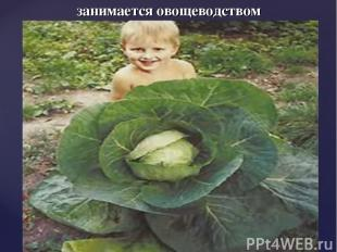 занимается овощеводством