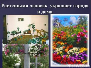 Растениями человек украшает города и дома