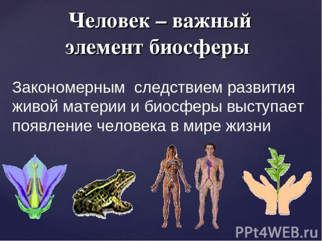 Человек – важный элемент биосферы Закономерным следствием развития живой материи и биосферы выступает появление человека в мире жизни