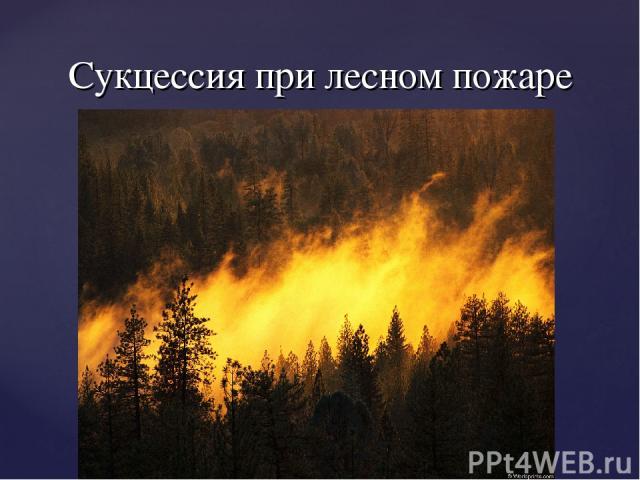 Сукцессия при лесном пожаре