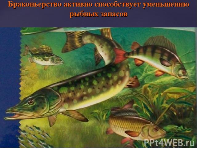 Браконьерство активно способствует уменьшению рыбных запасов