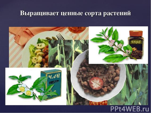 Выращивает ценные сорта растений