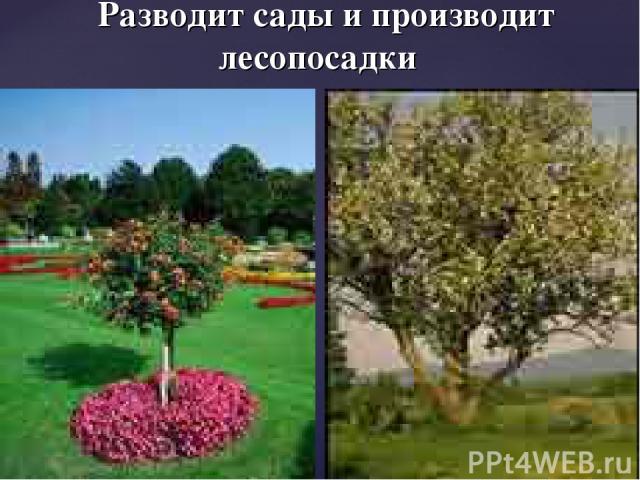 Разводит сады и производит лесопосадки