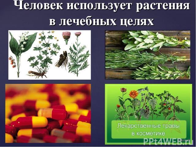 Человек использует растения в лечебных целях