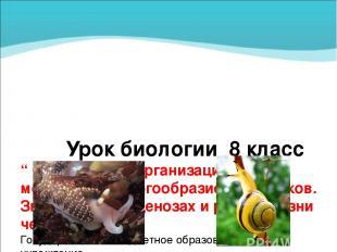 """Урок биологии 8 класс """" Особенности организации моллюсков. Многообразие моллюско"""