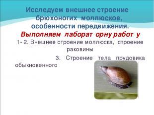 Исследуем внешнее строение брюхоногих моллюсков, особенности передвижения. Выпол