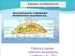 Каковы особенности внутреннего строения моллюсков? Работа в групах: ответить на
