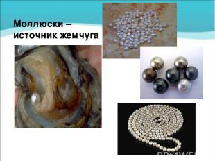 Моллюски – источник жемчуга