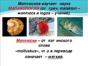 Моллюсков изучает наука МАЛАКОЛОГИЯ (от греч. malakion – моллюск и logos – учени