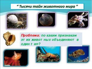 Проблема: по каким признакам этих животных объединяют в один тип?