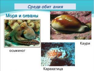 Моря и океаны Каури Каракатица осьминог Среда обитания