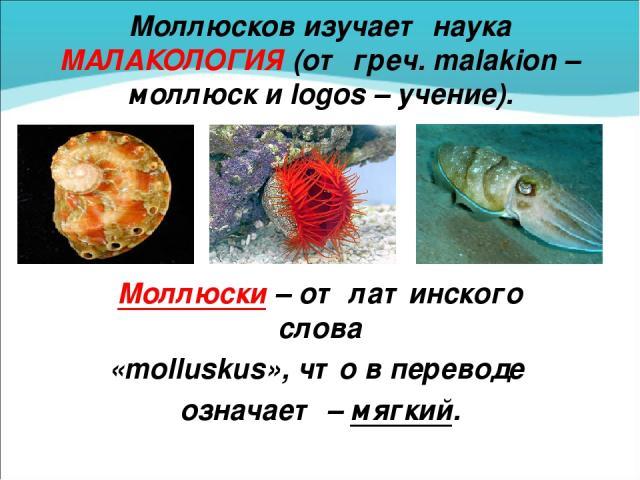 Моллюсков изучает наука МАЛАКОЛОГИЯ (от греч. malakion – моллюск и logos – учение). Моллюски – от латинского слова «molluskus», что в переводе означает – мягкий.