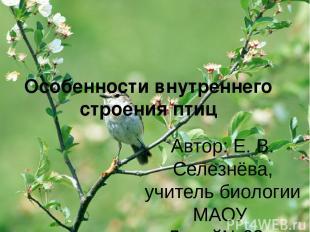 Особенности внутреннего строения птиц Автор: Е. В. Селезнёва, учитель биологии М