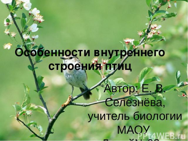 Особенности внутреннего строения птиц Автор: Е. В. Селезнёва, учитель биологии МАОУ «Лицей№62» г. Саратов