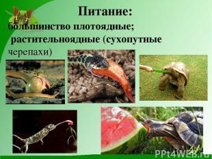 Питание: большинство плотоядные; растительноядные (сухопутные черепахи)