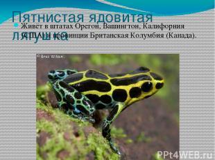 Пятнистая ядовитая лягушка Живёт в штатахОрегон, Вашингтон,Калифорния(США) и