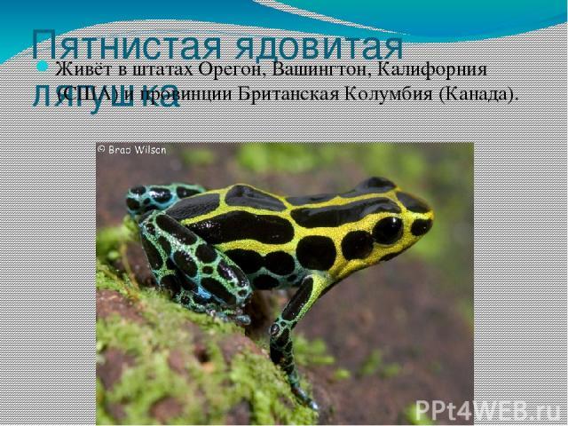 Пятнистая ядовитая лягушка Живёт в штатахОрегон, Вашингтон,Калифорния(США) и провинцииБританская Колумбия(Канада).