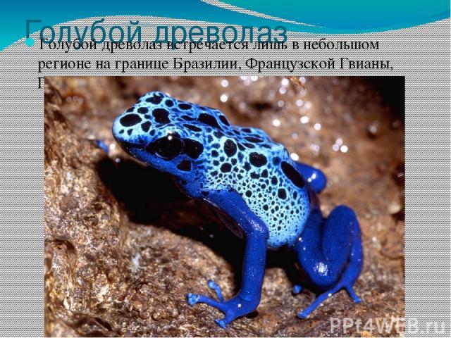 Голубой древолаз Голубой древолаз встречается лишь в небольшом регионе на границеБразилии,Французской Гвианы,ГайаныиСуринама.