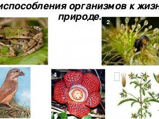 Приспособления организмов к жизни в природе. 1 2 3 4 5