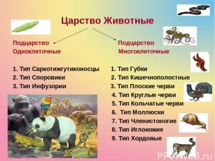 Царство Животные Подцарство Подцарство Одноклеточные Многоклеточные 1. Тип Сарко