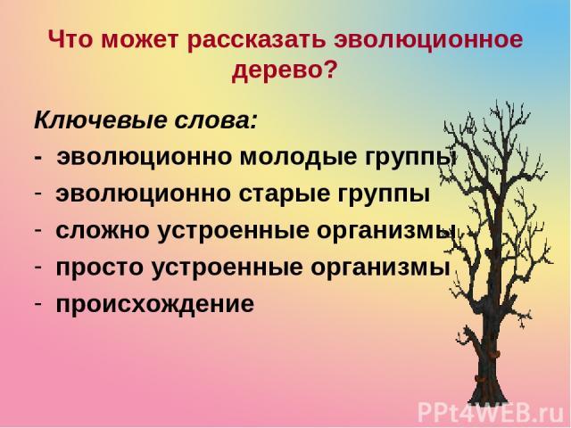 Что может рассказать эволюционное дерево? Ключевые слова: - эволюционно молодые группы эволюционно старые группы сложно устроенные организмы просто устроенные организмы происхождение