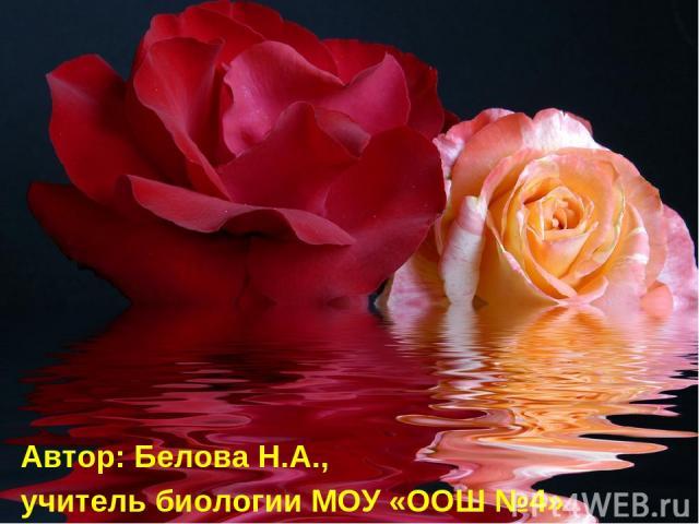 Автор: Белова Н.А., учитель биологии МОУ «ООШ №4»