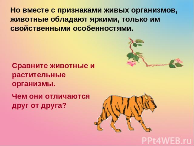Но вместе с признаками живых организмов, животные обладают яркими, только им свойственными особенностями. Сравните животные и растительные организмы. Чем они отличаются друг от друга?